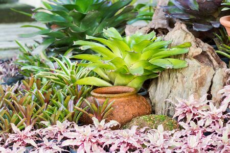 Clay jar of water decorate with colorful bromeliad plants in beautiful garden Stock Photo
