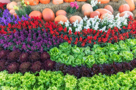 Top view of multi-colour flower and vegetable garden