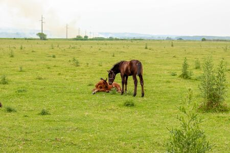 steeplechaser: two foals on a meadow Stock Photo