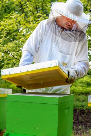 beekeeper: Beekeeper working abouth bees