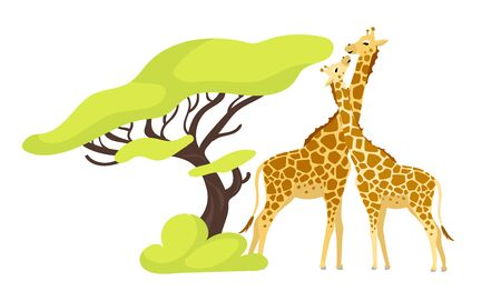 Giraffe pair flat color vector illustration. Pair of african animals near exotic tree. Flora and fauna. Green foliage. Southern creature isolated cartoon character on white background Vektorové ilustrace