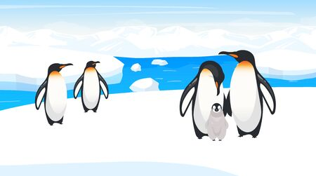 South pole wildlife flat vector illustration. Emperor penguins breed on snow hill. Polar bird species colony in natural habitance. Snow wilderness. Iceland environment. Animal cartoon characters