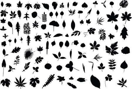 A hundred silhouettes of different leaves of trees, bushes and grass Vector