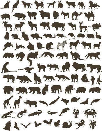 lynx: 100 czarne zarysy różnych zwierząt Ilustracja