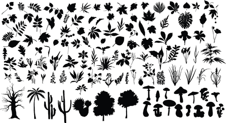 Vector silhouettes of different leaves, trees, bushes, flowers, herbs and mushrooms