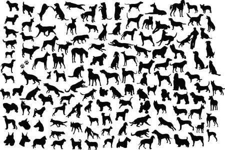 Výsledek obrázku pro lots of dogs