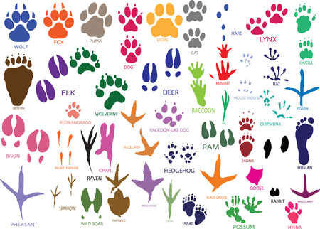 Vector paw prints of animals and birds Illustration