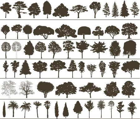 Zestaw silhouettes drzew wektora