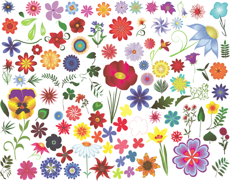Set of colored  floral design elements: flowers and leaves Illustration