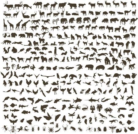 300 silhouettes of animals (mammals, birds, fish, insects) Ilustração