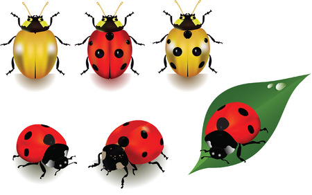 Ladybugs over white background. Illustration