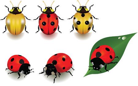 Ladybugs over white background. Vettoriali