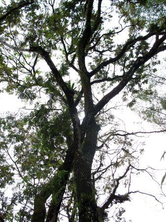 Trees Stock Photo - 13685175
