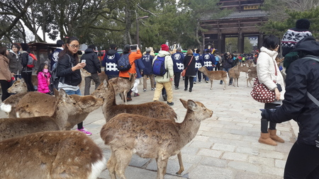 March 12 2015 Visitors at the entrance of a temple in Nara Japan. Nara is a major tourism destination in Japan.