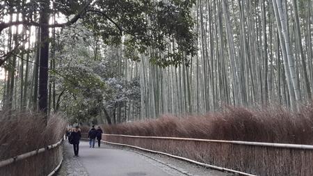 March 13 2015 - The Arashiyama Bamboo Grove of Kyoto Japan
