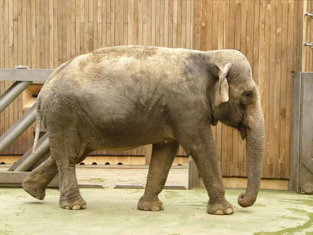 fetter: Photo of elephant in the zoo