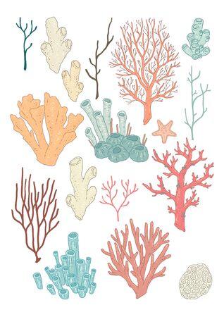 corals: Set of colorful corals
