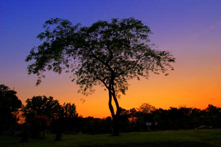 twilight: THE TREE AND TWILIGHT SKY