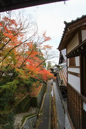 Fall foliage at Eikando Temple(Zenrin-ji ),Sakyo-ku,Kyoto,japan