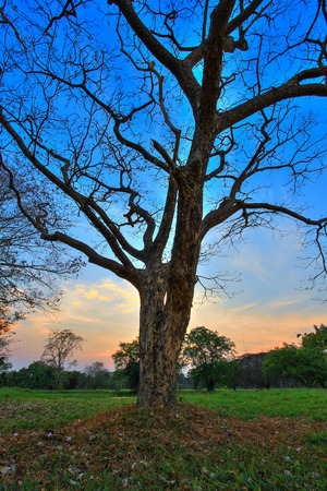 leafless: Leafless trees and evening sky Stock Photo