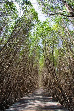 Mangrove Forest Natural Trail at Laem Phak Bia,Pethaburi province,Thailand Banco de Imagens