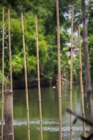 riverside tree: waterfront and rural atmosphere at Khlong Bang Ramat,a canal in Bangkok,Thailand