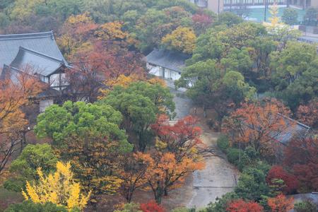 japanese fall foliage: Autumn view from Osaka Castle Main Tower,Japan Stock Photo