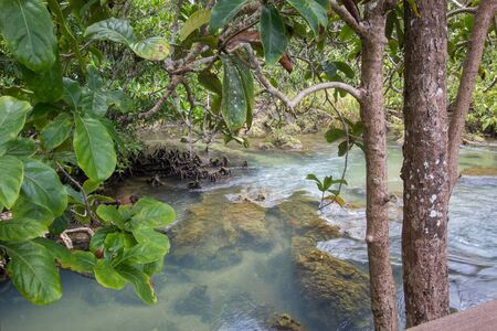 clear water: Emerald-green water at peat swamp forest of the canal of Tha Pom in Krabi province,Southern Thailand Stock Photo