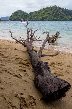 A log lying on the beach of Phak Bia Island,Ao Luek District, Krabi,Thailand