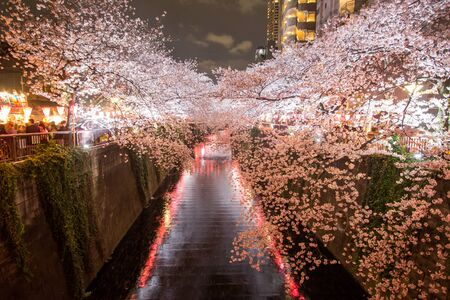 Cherry trees along Meguro River,Meguro-ku,Tokyo,Japan are light up in the evenings of spring. Stock Photo