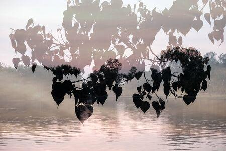 川の背景の上に重ねボー Tree(sacred fig,Ficus religiosa) の葉のシルエット。