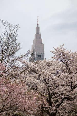 日本: Cherry trees at Shinjuku Gyoen,Tokyo,Japan in spring. 写真素材