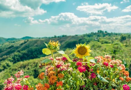 Colorful flowers with mountain view background at Khao Kho,Phetchabun Province,northern Thailand. Stock Photo
