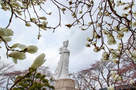 船岡平和観音像、白モクレンの花と船岡城遺跡公園、柴田、東北地方の山頂の桜の木。