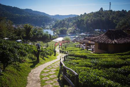 Earthen buildings and U-Long tea plantations at Ban Rak Thai Village,near Thai-Myanmar border,Mae Hong Son province,Northern Thailand.