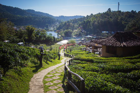 Earthen buildings and U-Long tea plantations at Ban Rak Thai Village,near Thai-Myanmar border,Mae Hong Son province,Northern Thailand.