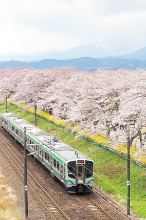 Shibata,Miyagi,Tohoku,Japan on April 12,2017:JR Tohoku line train and cherry trees along Shiroishi river banks in spring.
