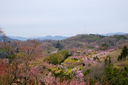 Fukushima City,Mt.Azuma,multicolor flowering trees as seen from Hanamiyama Park,Fukushima,Tohoku,Japan. Stock Photo