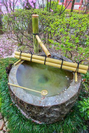 Tsukubai Water Fountain in Japanese Garden at Kita-in Temple,Kosenbamachi,Kawagoe,Saitama,Japan in spring.With sakura petals around the washbasin.