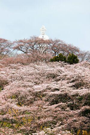 Funaoka Peace Kannon and cherry trees on the mountaintop of Funaoka Castle Ruin Park,Shibata,Miyagi,Tohoku,Japan.(April 12,2017)
