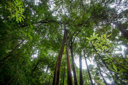 Pure nature in the middle of the bushy evergreen forest of Umphang Wildlife Sanctuary,Tak Province,Thailand.