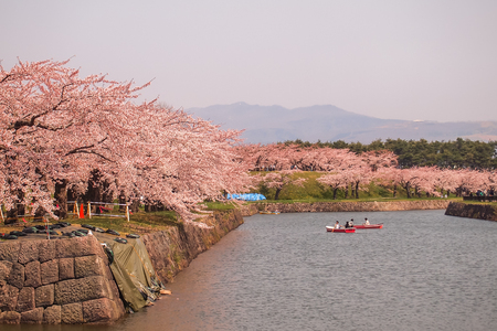 Hakodate,Hokkaido,Japan on April 29,2018:Tourists enjoyed paddling the boats and cherry blossom viewings at Fort Goryokaku in spring. 報道画像