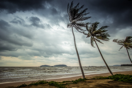 Strong wind attacked the coconut trees along Pharadonphap Beach in Chumphon Province,southern Thailand