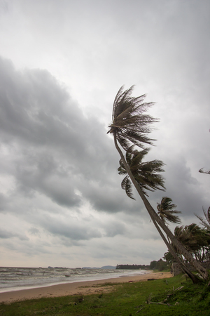 Strong wind attacked the coconut trees along Pharadonphap Beach in Chumphon Province,southern Thailand Reklamní fotografie