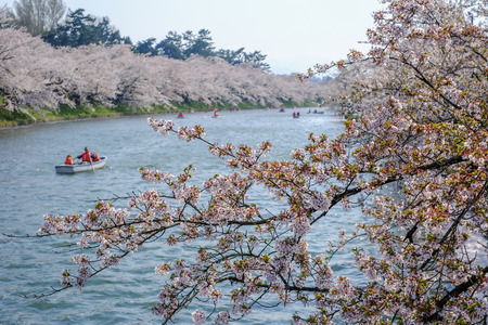 Hirosaki Cherry Blossom Festival 2018 at Hirosaki Park,Aomori,Tohoku,Japan on April 28,2018:Tourists enjoyed rowing boats and viewing cherry blossoms along the west moat.