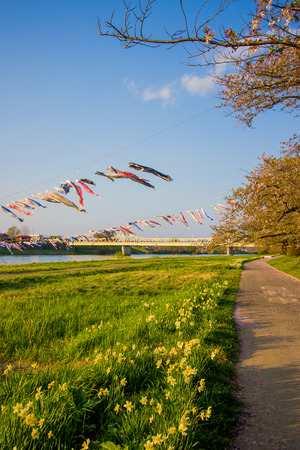Beautiful walkway along Kitakami River at Tenshochi Park,Kitakami,Iwate,Tohoku,Japan.