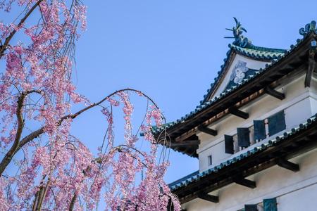 Hirosaki Cherry Blossom Festival 2018 at Hirosaki Park,Aomori,Tohoku,Japan on April 28,2018:The main keep of Hirosaki Castle with weeping cherry blossoms in the foreground.(selective focus)