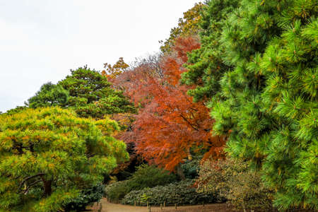 Bunkyo City,Tokyo,Japan on December6,2019:Beautiful autumn colors at Rikugien Garden.
