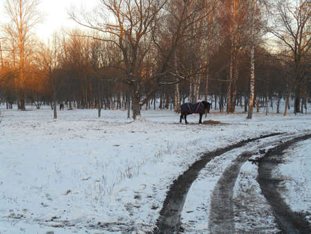 blanket horse: Horses in the snow park