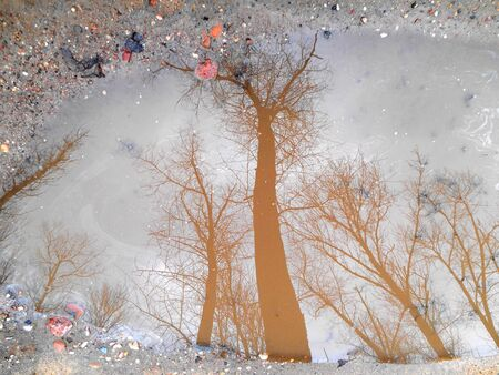 Trees reflected in a puddle Stock Photo